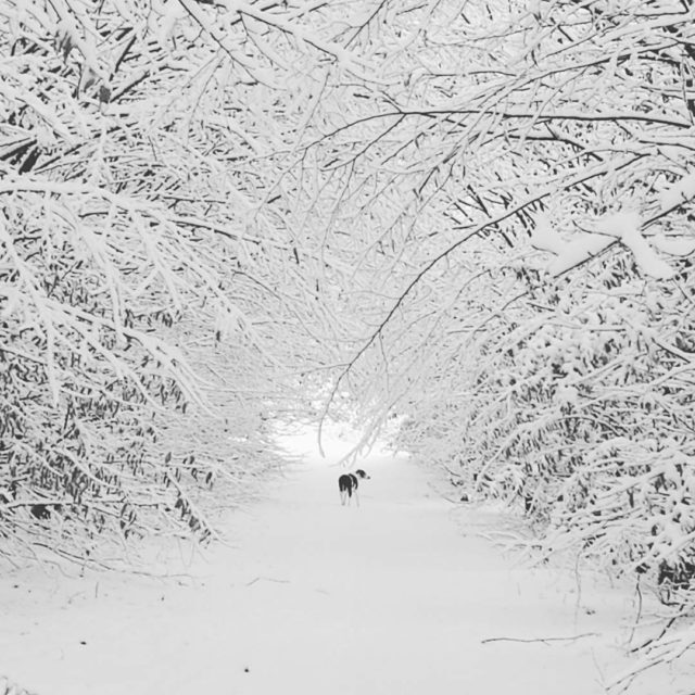 The snow must go on  Questo  il paesaggiohellip