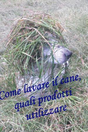 COME LAVARE IL CANE, QUALI PRODOTTI USARE