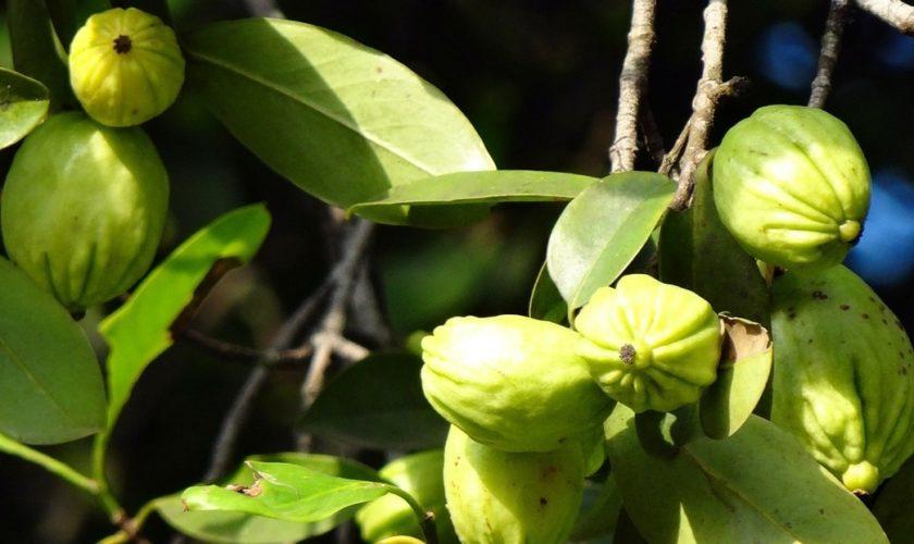 garcinia-cambogia-integratore- frutto-min