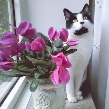 benefici e vantaggi di avere un gatto in casa