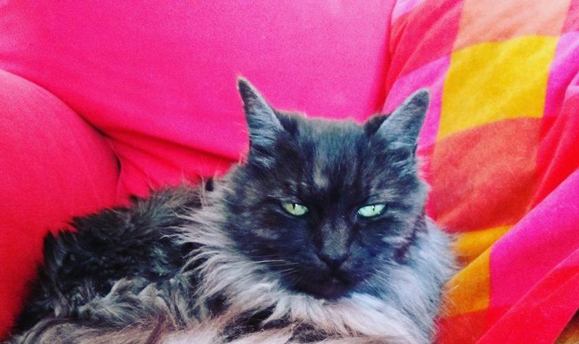 come proteggere il salotto dai graffi dei gatti-min