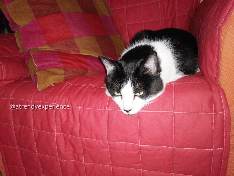 copridivano antigraffio per salvare il divano dai gatti
