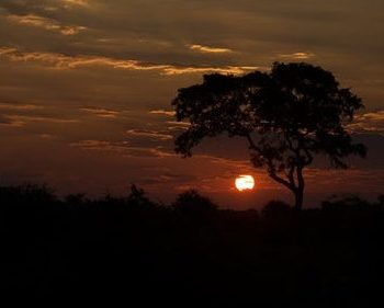 cropped-parco-nazionale-kruger-sudafrica.jpg