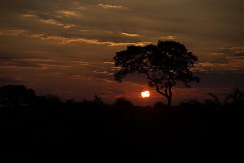 Parco Kruger, la meraviglia delle meraviglie