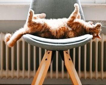 Autunno in arrivo è tempo di pulire i termosifoni!