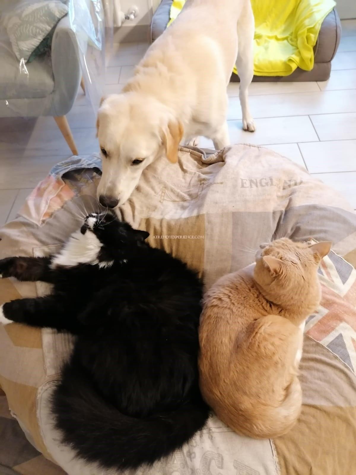come pulire la coperta e la cuccia degli animali