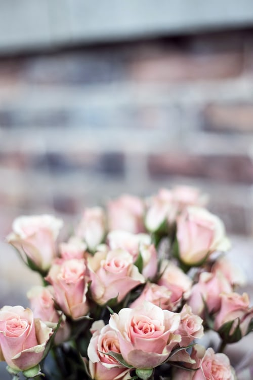 regalare fiori online con floraqueen