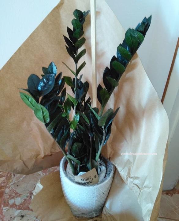 Fiori e piante a domicilio con Colvin la mia esperienza
