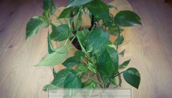 piante da interno depurative