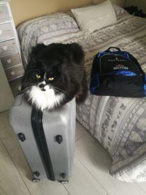 gatto sulla valigia
