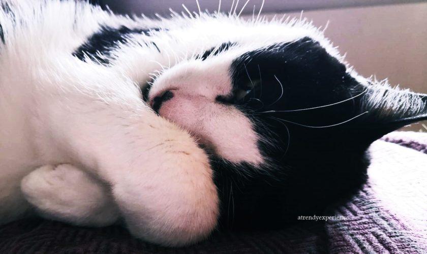 gatto in casa come tenerlo e organizzare l'ambiente
