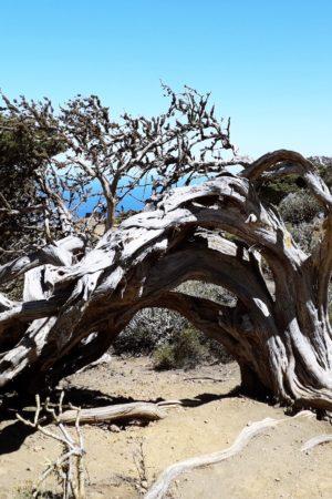 strada delle sabine isola di El Hierro