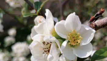 rinite allergica cause sintomi rimedi naturale e utili