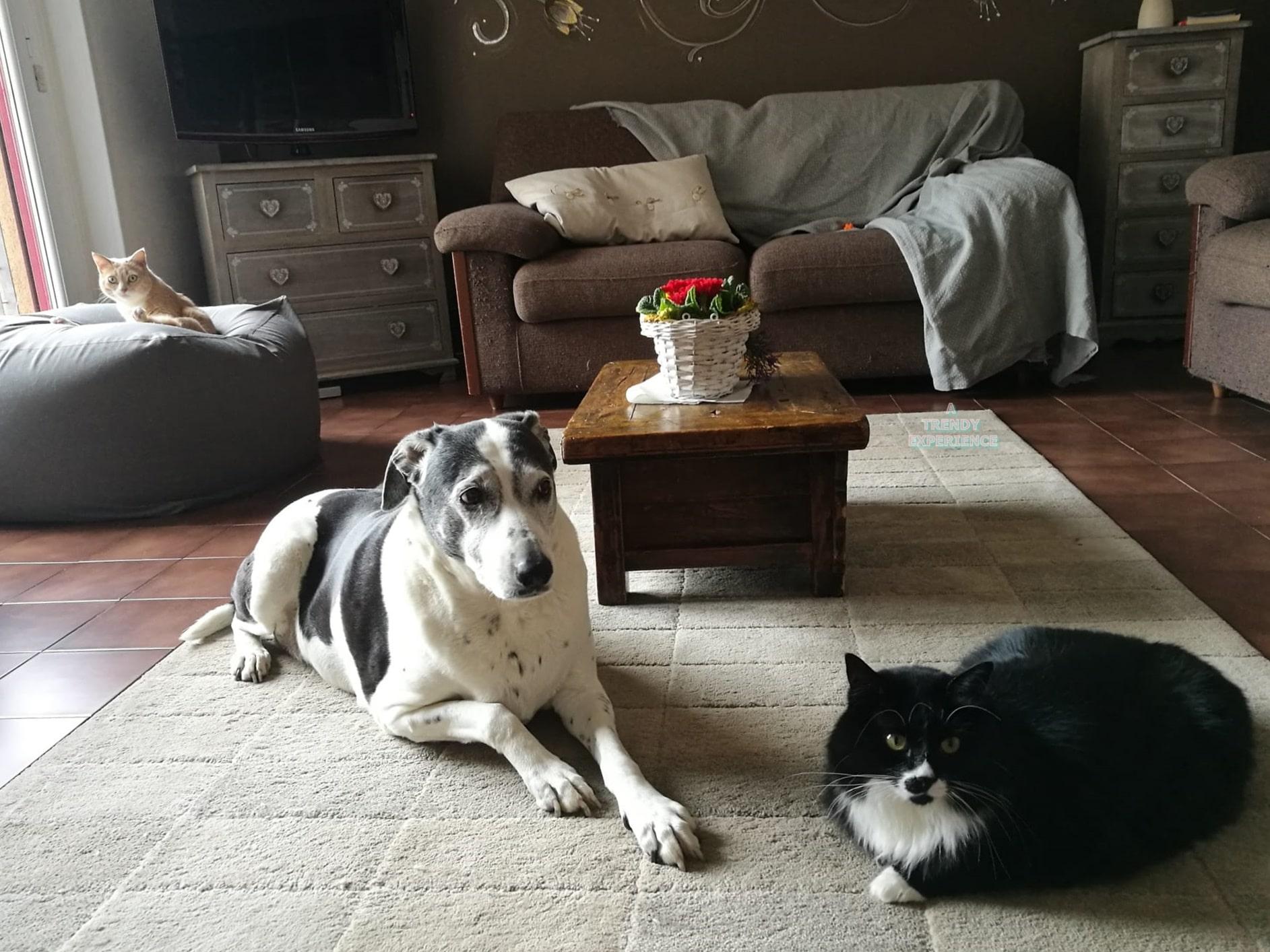 convivenza cane gatto serena e felice