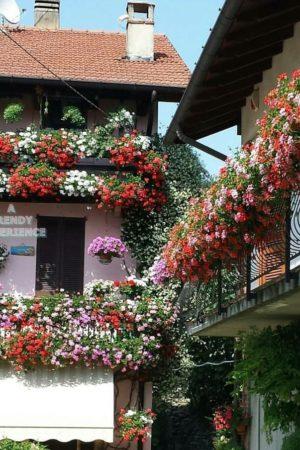 piante e fiori da balcone