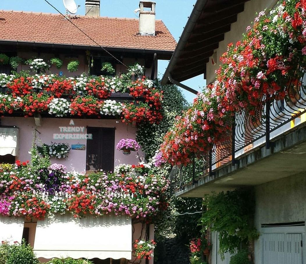 Piante e Fiori da balcone per decorare le mura della casa!
