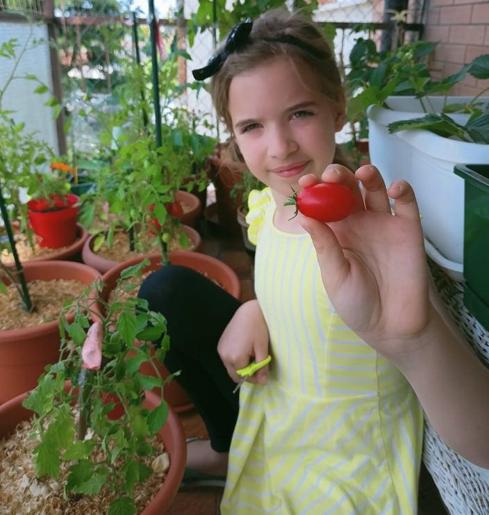 come coltivare i pomodori in vaso sul balcone o terrazzo