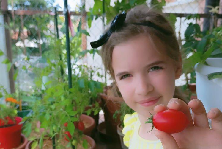 come coltivare i pomodori in vaso orto verticale