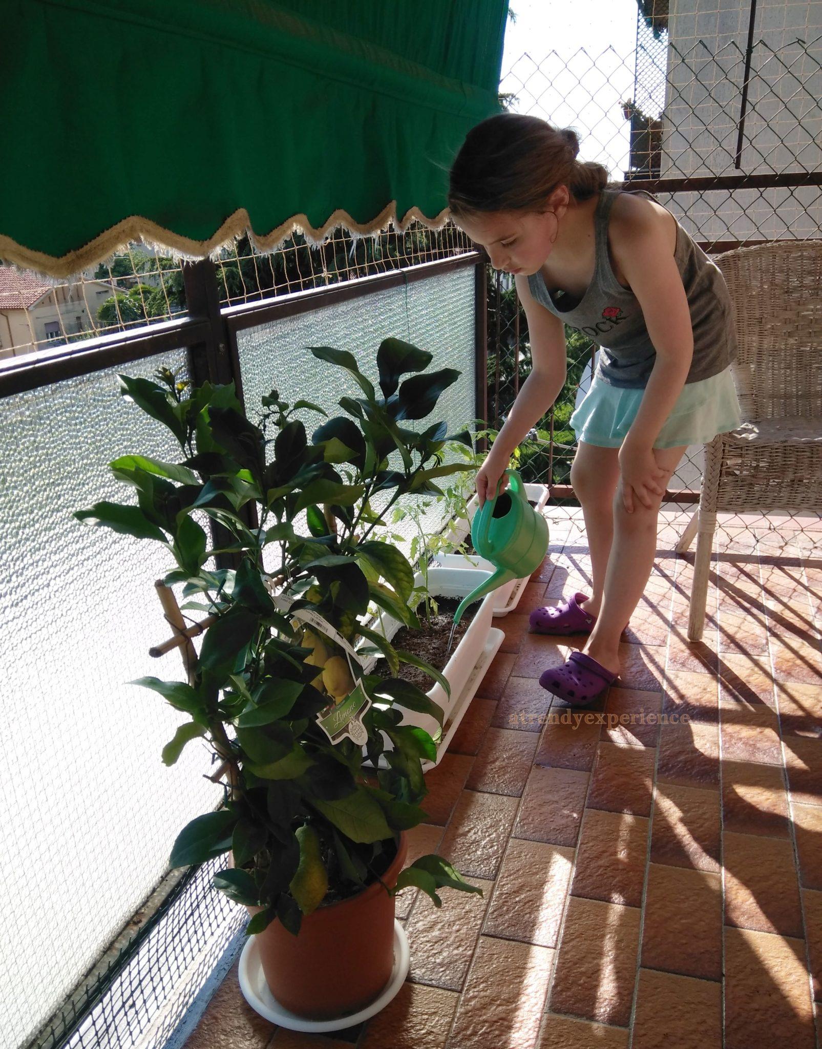 orto verticale manutenzione coltivare i pomodori in vaso