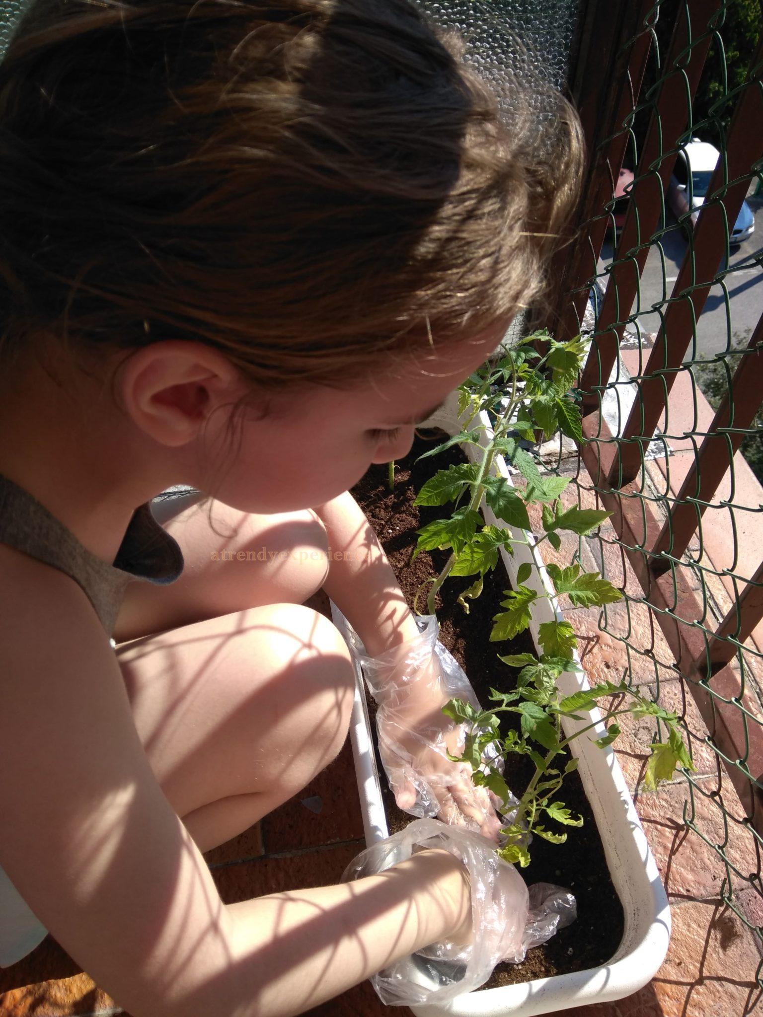 come coltivare i pomodori in vaso