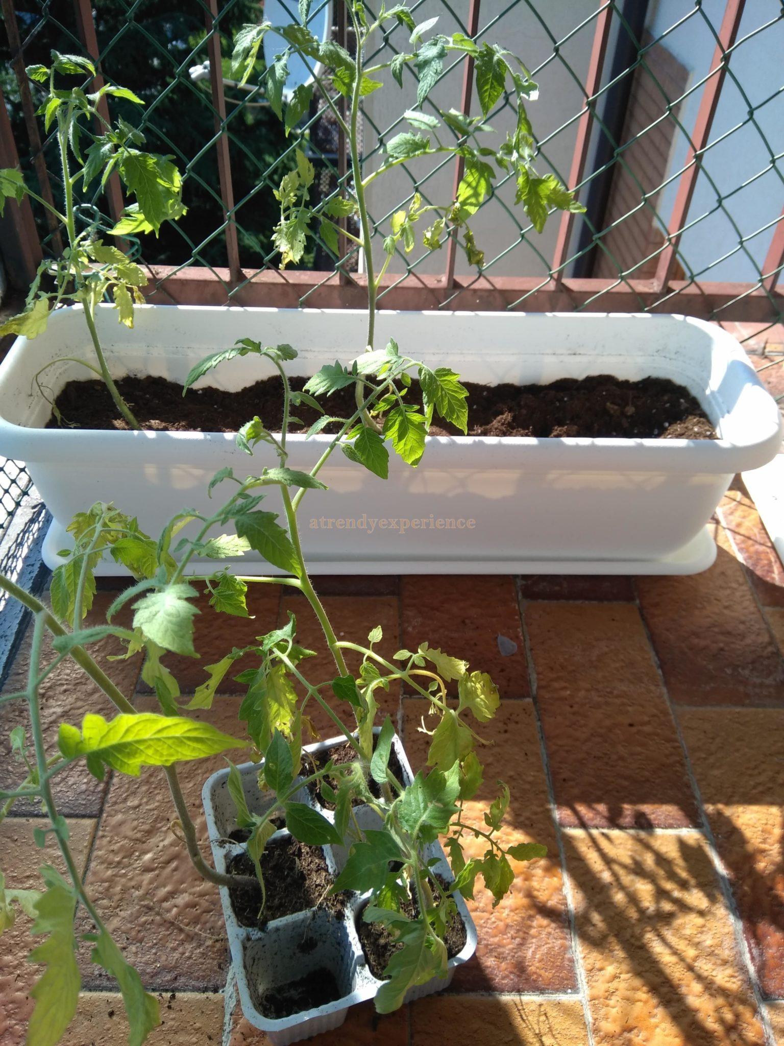 orto verticale come coltivare i pomodori in vaso