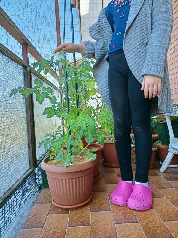 Orto verticale: come e dove posizionare le piante