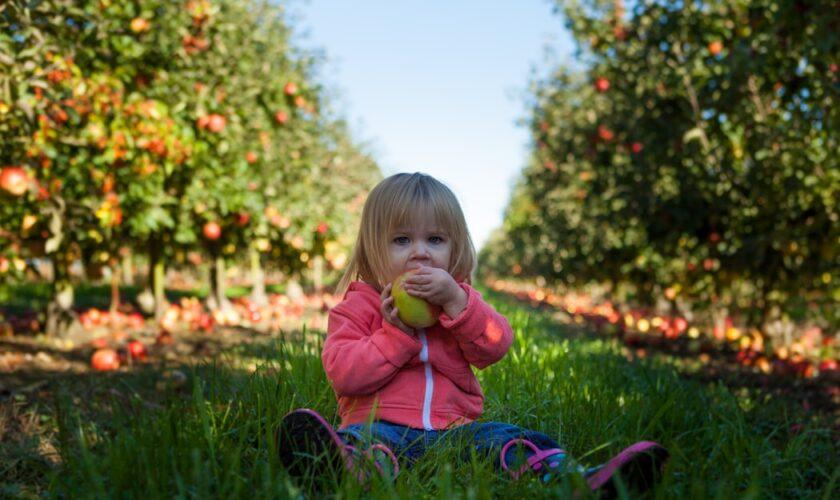alimentazione corretta bambino dieta e consigli utili