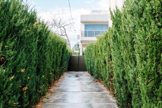 piante e alberi frangivento