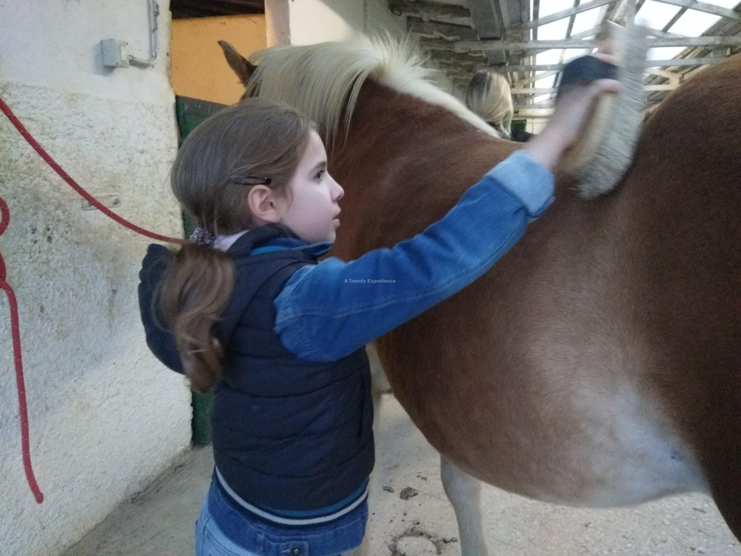 equitazione per bambini manutenzione cavallo