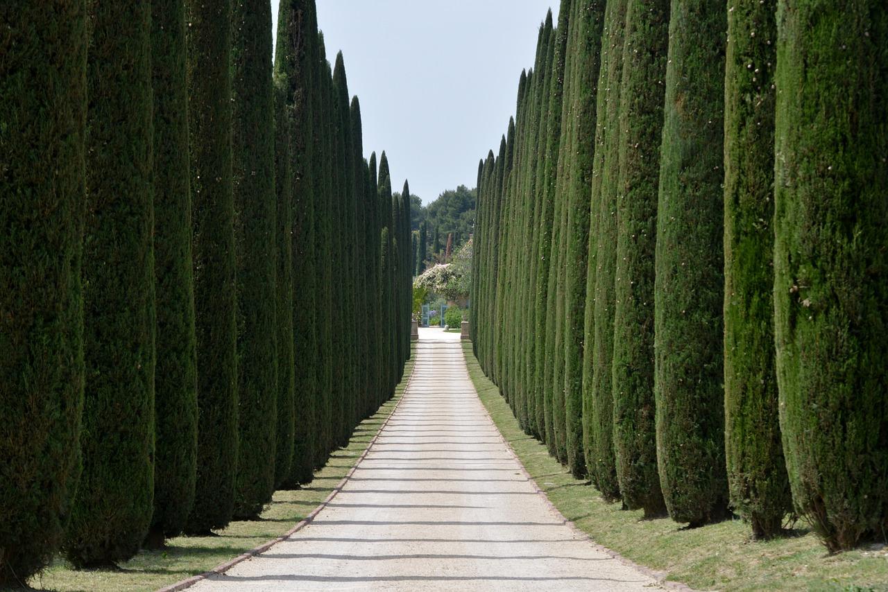 cipressi alberi frangivento