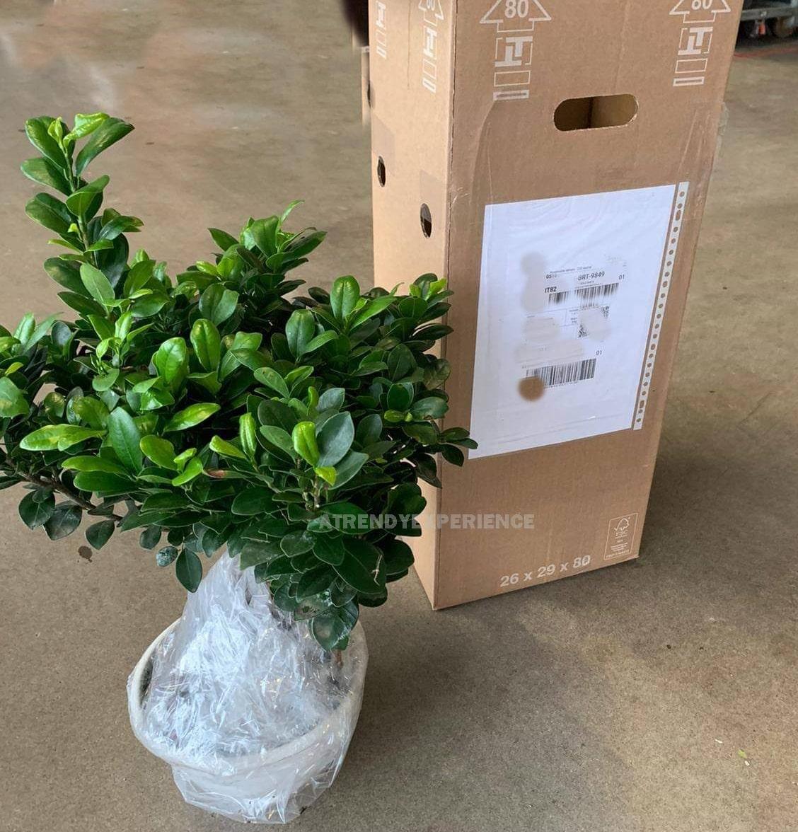 imballaggio pianta pianteclub