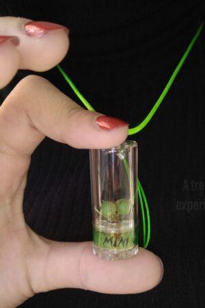 minì le mini piante in capsula