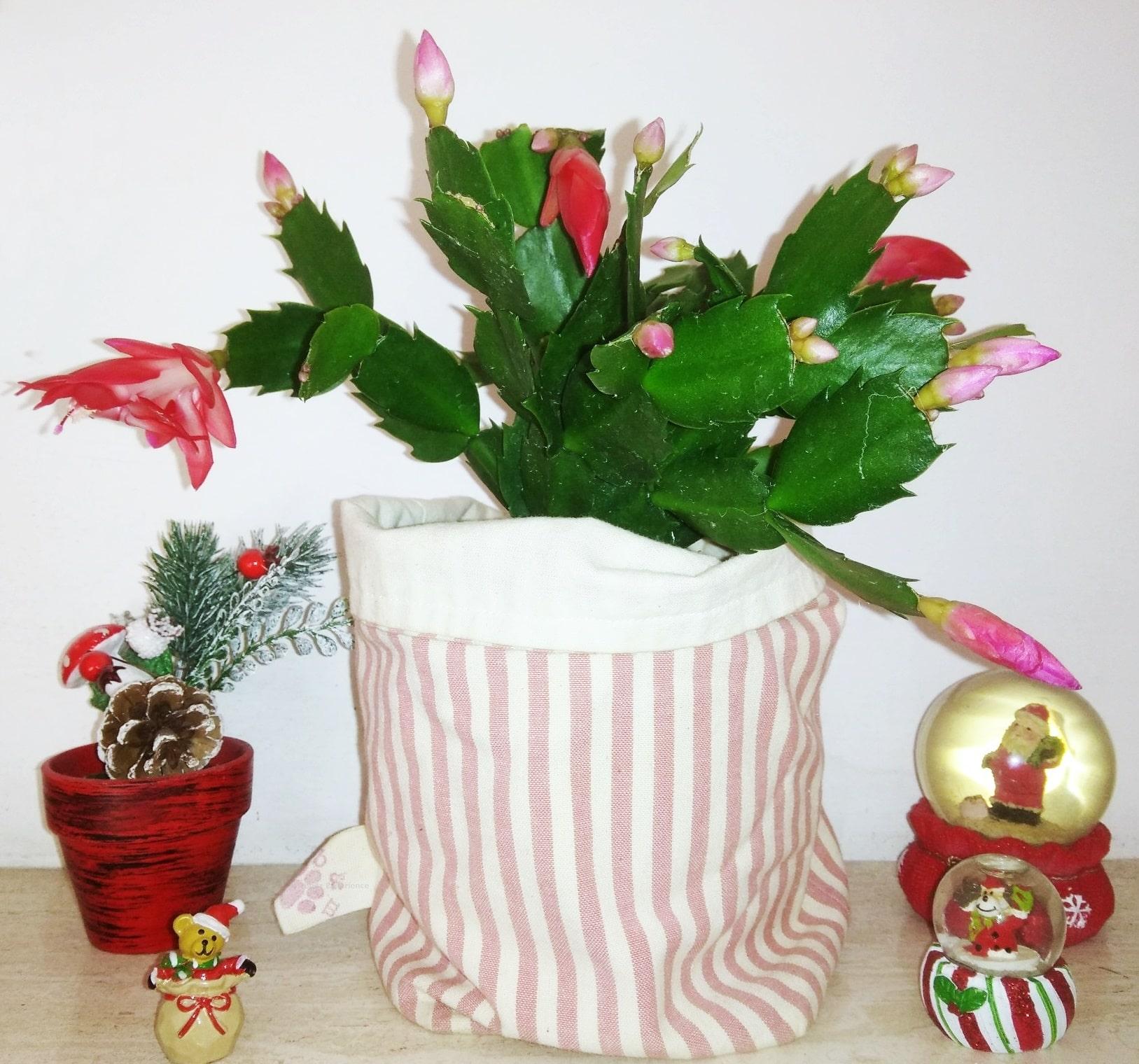 Schlumbergera Cactus Di Natale consigli utili