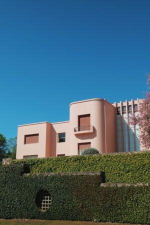 alberi antivento per case giardini terrazzi