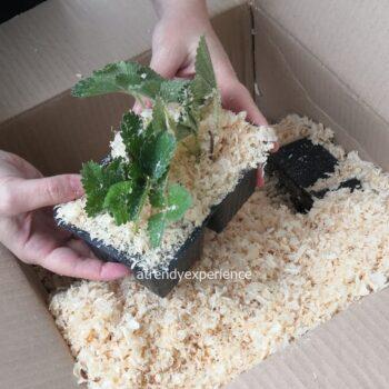 piantine da orto imballaggio spedizione