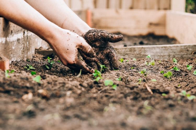 Creazione dell'orto