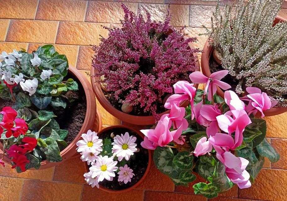 Il crisantemo e i fiori autunnali